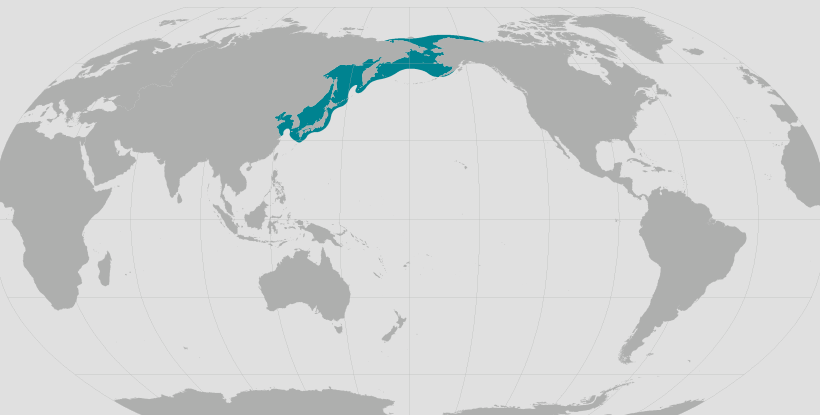 Spotted seal range map.