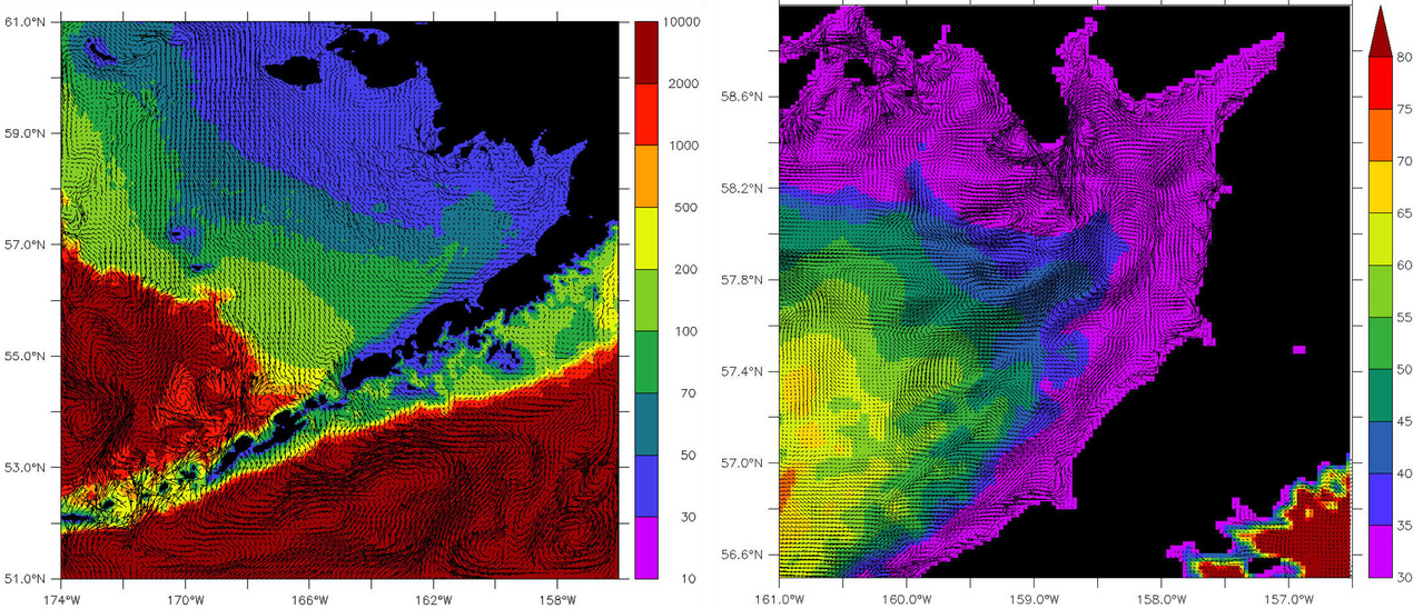 Left: Model grid (2 km resolution) with sample surface velocities (weekly averages) for May 14, 1999. Every 5th vector is plotted. Right: Close-up of the model grid in Bristol Bay. All velocity vectors are plotted. Colors correspond to bathymetric depth in meters. Vector scale is shown in m s-1. Click image to enlarge.