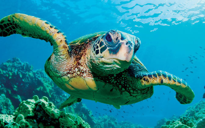 swim into sea turtle week 2018 noaa fisheries