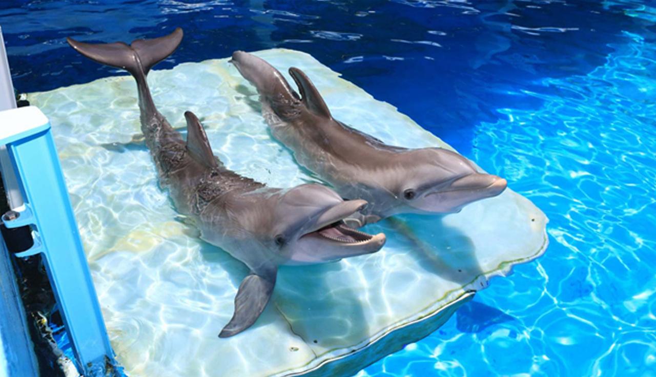 img_hero_dolphins.jpg