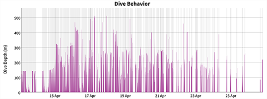 Dive behavior of sub-adult ribbon seal.