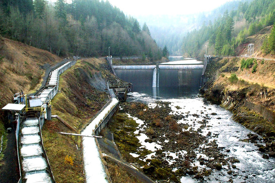 Fish Migration Clackamas Hydropower Webstory UPDATE 3x2.jpg